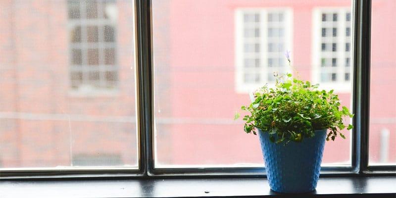 Dépolluer votre inétrieur avec des plantes vertes