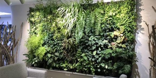 Avantages du mur végétal